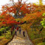 秋月城跡の紅葉の時期、見どころの黒門は撮影する人で混雑!