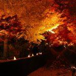 河口湖の紅葉の時期や紅葉まつり、もみじ回廊とトンネルの紹介