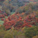 那須高原の紅葉の時期や見ごろ、混雑についてのまとめ