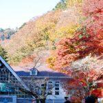 高尾山の紅葉の時期や紅葉まつり、おすすめのコースは一号路!
