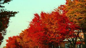 飛騨美濃せせらぎ街道の紅葉の時期や見所、渋滞情報のまとめ