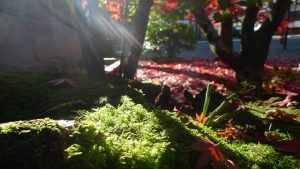 箱根美術館の紅葉の見頃と料金、混雑回避には共通券が鍵!