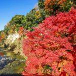 養老渓谷の紅葉の時期、ライトアップと渋滞について教えます!